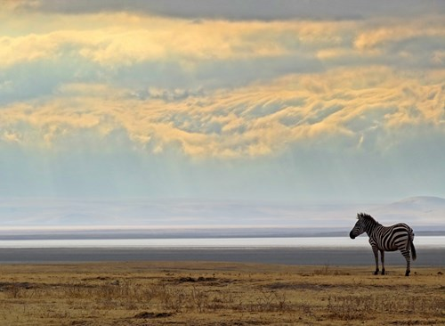 Ngorongoro Crater sunrise with Zebra
